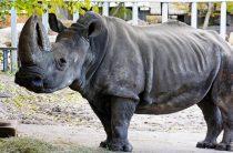 В киевском зоопарке скончалось старейшее животное