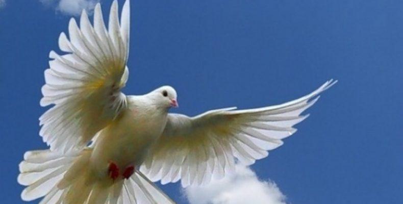 Как принести мир на Донбасс.