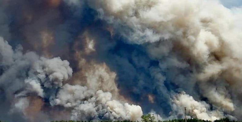 В Луганской области горит лес, пять человек погибло. Что еще известно
